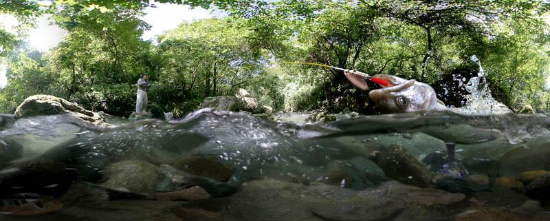 fisher800.jpg