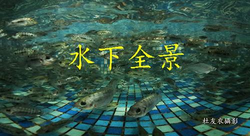 《鱼儿乐悠游》字.jpg