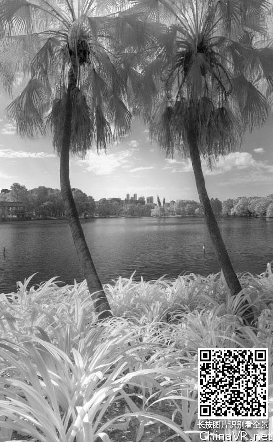 红外全景摄影-流花湖葵林